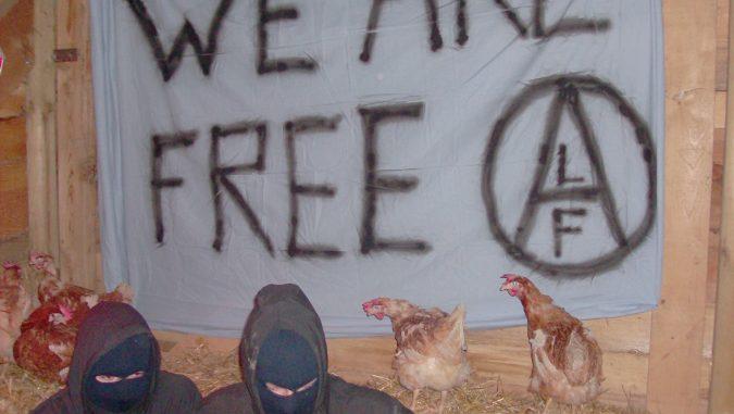 Actievoerders bevrijden 15 kippen uit een legbatterij