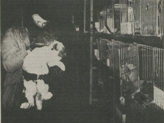 DBF activist haalt een konijn uit een kooi