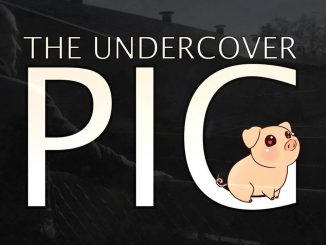 The Undercover Pig