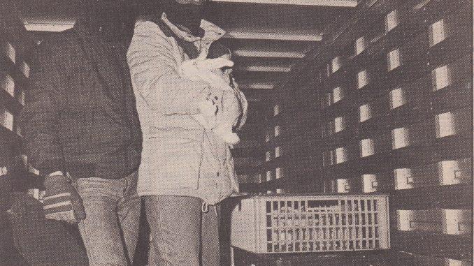 Actievoerders bevrijden konijnen