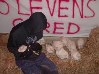 Activist with rescued turkeys