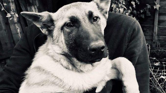 Activist met een puppy